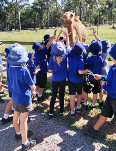 School Children feeding Gypsy the Camel at White Ridge Farm